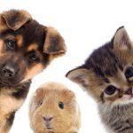 Coloranti per pet food